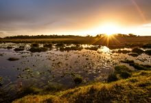 iSimangaliso Wetland Park Bursary 2021–2022